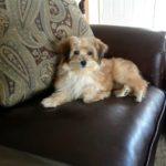 bijou_1_Puppy-go-here