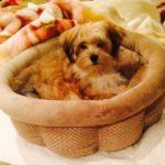 bijou_2_Puppy-go-here