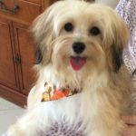 bijou_3_Puppy-go-here