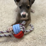 may15_img_puppy-pan_2