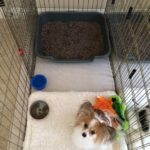 puppygohere_litter_box_01