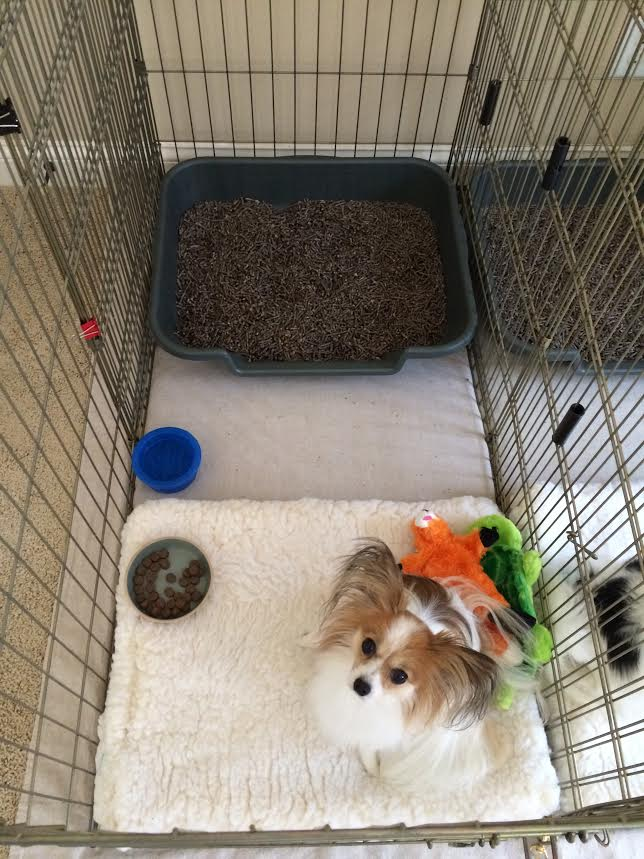 Dog Toilet Training Pads