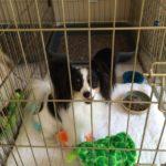 puppygohere_litter_box_02