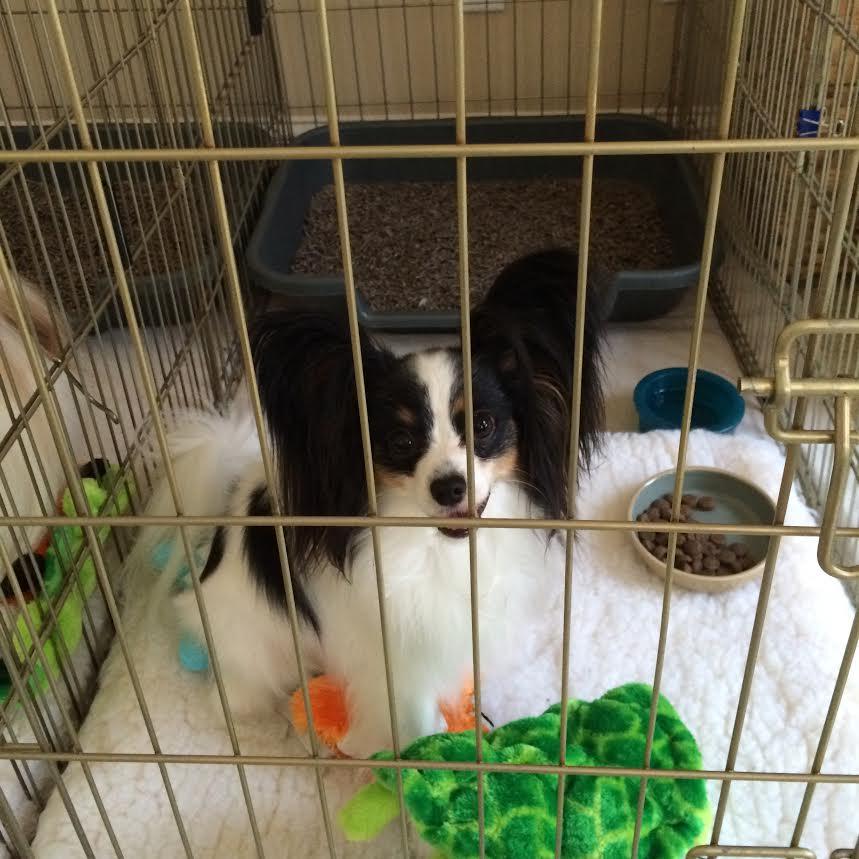Buy Dog Litter Box, Buy Dog Litter Pan, And Litter Box For