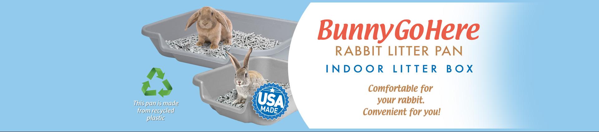 bunnygohere3